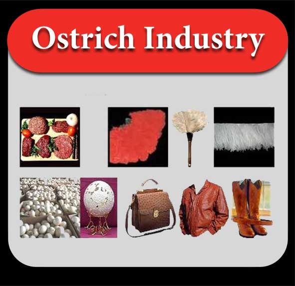 ostrich-industry-en